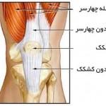 تشخیص،علائم و درمان پارگی تاندون کشکک زانو