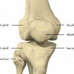 آناتومی استخوانها و مفاصل زانو