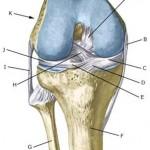 علل و درمان غیر جراحی پارگی رباط صلیبی زانو